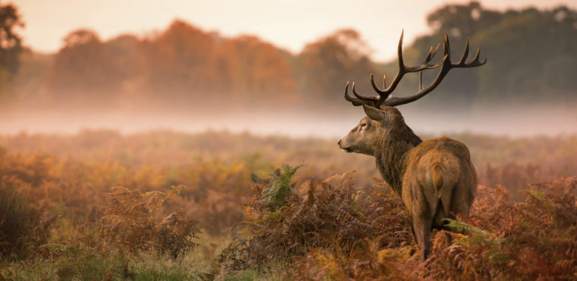 Essential Tips for Great Wildlife Photography